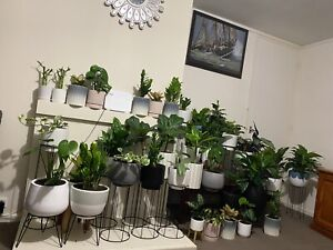 Collection of indoor plant