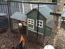 5 Laying Chickens plus Run plus Enclosure plus Food plus Feeder! West Pymble Ku-ring-gai Area Preview