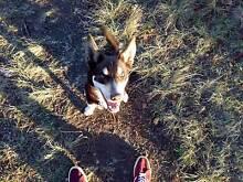 DOG WALKER Armidale Armidale City Preview