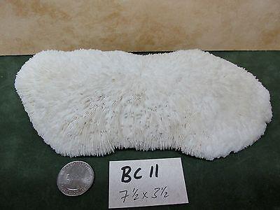 BC11) Nice 7-1/2 X 3-1/2 inch BOWL CORAL white slipper table fungia Aquarium USA for sale  Winona