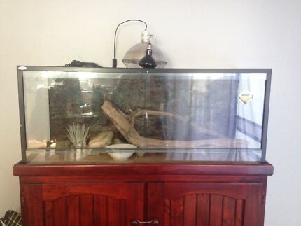 Dalbarb 4ft Terrarium includes stained cabinet, thermo, UV etc New Lambton Newcastle Area Preview