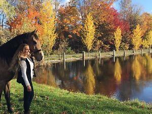 J'offre mon cheval en Demi pension