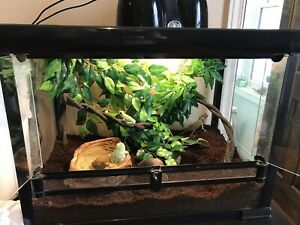 Reptile/Amphibian Tank- Includes Animals