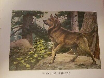 Louis A Fuertes NORWEGIAN ELKHOUND bookplate 1919 National Geographic Magazine