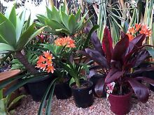 Plant Sale !!! O'Halloran Hill Marion Area Preview