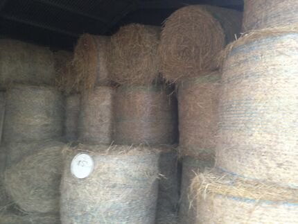 Rhodes grass hay for sale Glamorgan Vale Ipswich City Preview