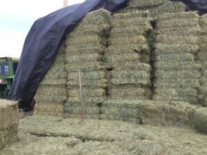 EXCELLENT HORSE HAY ALFALFA/GRASS 20 MIN W OF G.P.