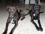 Black Dogs Surplus