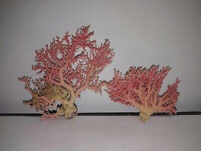 Set of 2 pink corals. Sea shells. Collector home decor beach #2