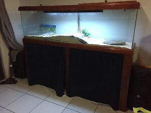 6 ft lizard or snake tank Andrews Farm Playford Area Preview