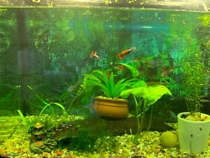 Need a new home for this guppies