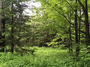 Terrain boisé 5 acres - Wentworth Nord
