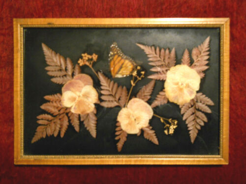 Lovely Framed Picture-- Pressed PANSIES, FERNS & BUTTERFLY under Glass, Unique