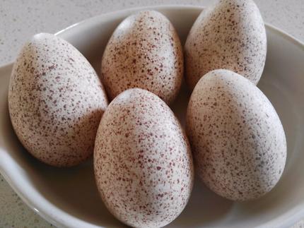 Fertile Turkey eggs