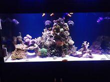 400L Marine Aquarium Complete Set Up Bullsbrook Swan Area Preview