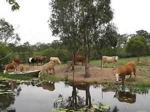 43 acre FARM NEAR BUNDABERG 2 RESIDENCES DISABILITY ASSIST Bucca Bundaberg Surrounds Preview