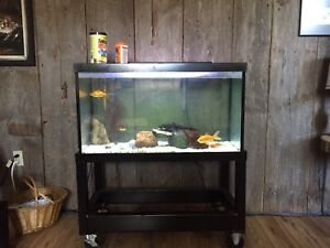 50 Gallon Fish Tank with Custom Stand