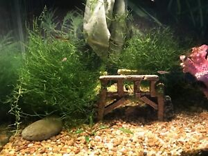 Java Moss for fish aquariums - beaches Toronto