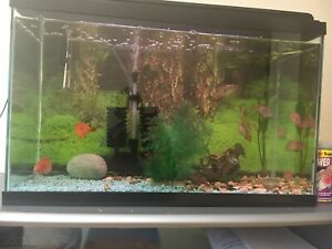 33 gallon tank including everything pending pick up