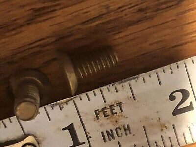 9 Lbs Assorted Lot Of Brass Slotted Machine Screws Most Brass