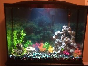 WANTED: Fish for 40 Gallon Tank