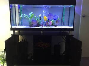 discus tank for sale Cairnlea Brimbank Area Preview