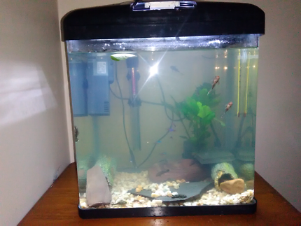 Wanted: 2x Complete tropical or fresh water set up
