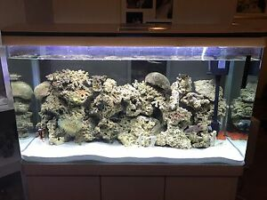 White gloss fish tank with full led lights. 2 weeks old Kinross Joondalup Area Preview