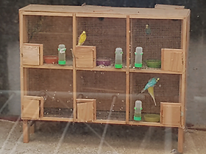 Budgies with cage for sale Hampton Park Casey Area Preview