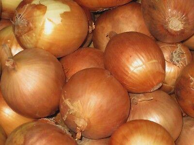 Onion Seeds- Sweet Yellow Spanish Heirloom- 250+ 2018 Seeds