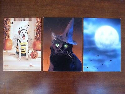 Lot of 3 Avanti Halloween Greeting Cards Dog in Bee Costume Black Cat Witch Hat