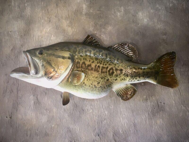 Largemouth  Bass Taxidermy Replica Fish Mount!