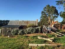 Silver Brumby Trails. Spring Hill Macedon Ranges Preview
