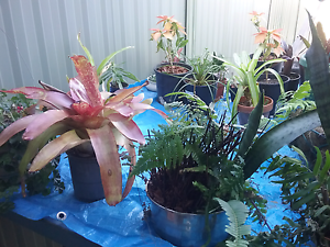 Assorted plants Cleveland Redland Area Preview