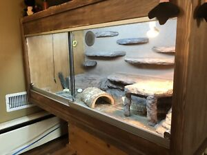 Bearded Dragon and habitat