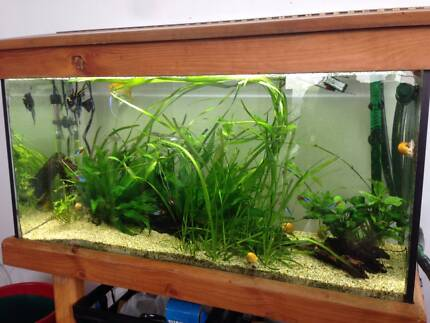 Aquarium for sale with fish and lots of plants!!! Travancore Moonee Valley Preview