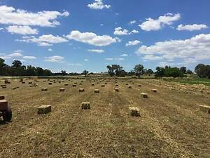 Lucerne Hay - First Cut Gilgandra Gilgandra Area Preview