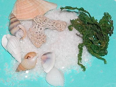 1pack bag dollhouse miniature Ocean SEAWEED Only for snowglobes glass bottles