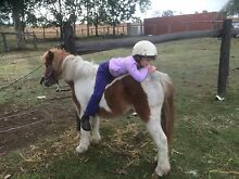 Great Kids 1st Pony! Somerset Dam Somerset Area Preview