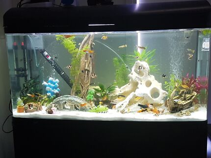 PRICE DROP u003e Aqua one Aquastyle 980 Tall with fish and everything & aqua one 980 | Gumtree Australia Free Local Classifieds azcodes.com