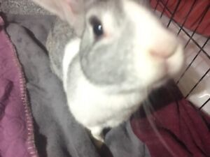 Two adorable loving bunny's need of new home