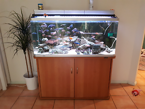6ft and 4ft tanks and stands for sale in reasonable condition Wattle Grove Liverpool Area Preview