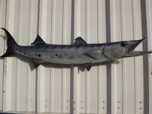 """48"""" Barracuda Two Sided Fish Mount Replica - 10 Business Day Production Time"""
