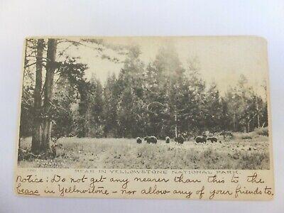 Yellowstone postcard - Albertype - Bears - Ft. Washakie, Wyo postmark