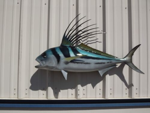 """43"""" Roosterfish Two Sided Fish Mount Replica - 10 Business Day Production Time"""
