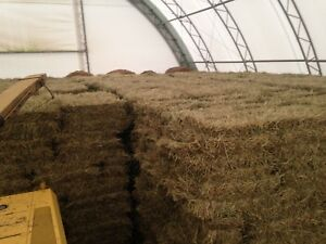 Clean Bales of straw for sale