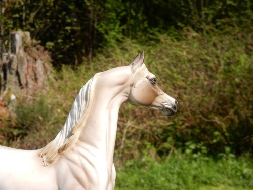 Peter Stone Arabian Stallion DAH Glossy Strawberry Roan