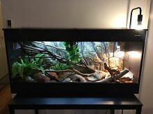 4ft REPTILE ONE tank + 5yr CHILDRENS PYTHON Fortitude Valley Brisbane North East Preview