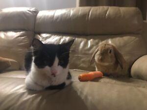 Very loving and precious bunny