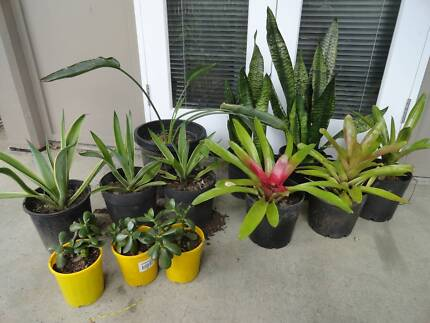Bulk Lot of 12x Potted Garden Plants $15 each or 12 for $100